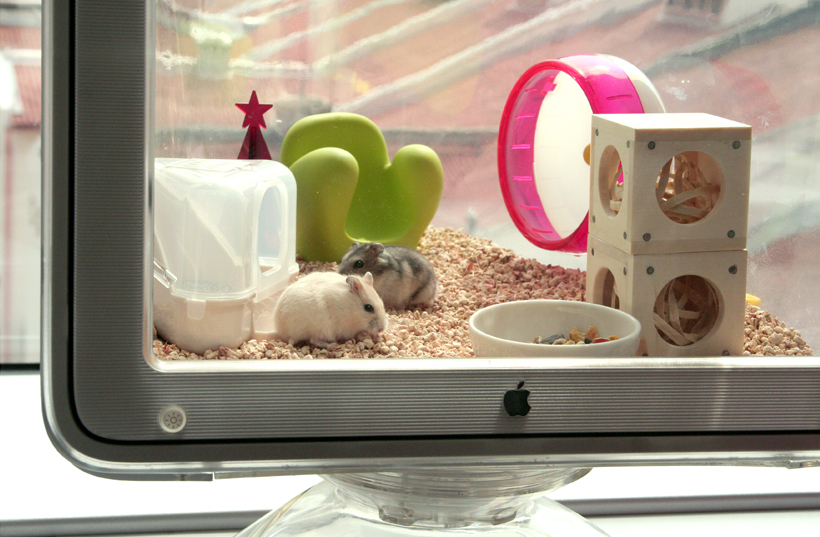 Mice Cage Powered by Apple