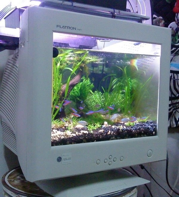 A fish tank powered by LG